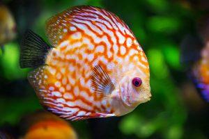 es-10-meilleurs-poissons-pour-debuter-avec-un-petit-aquarium