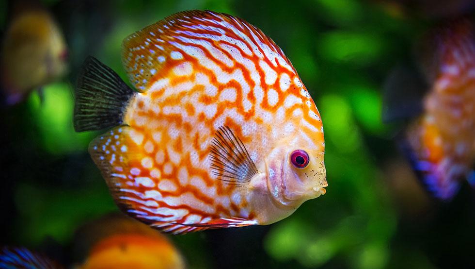 Les 10 meilleurs poissons pour d buter avec un petit for Poisson pour eau froide